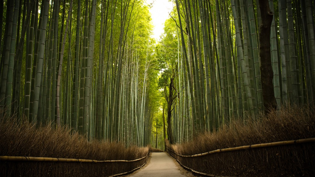 51457_forest_bamboo_forest1-e1428145879767