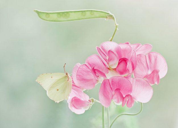 que ce printemps vous inspire dans la renaissance, l'éclosion, et le déploiement